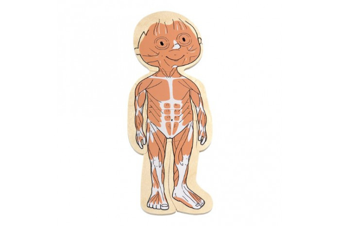 Your Body: 5 Layer Girl Puzzle